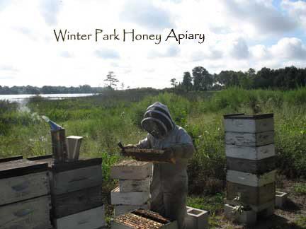 Florida Wildflower Honey - Kosher