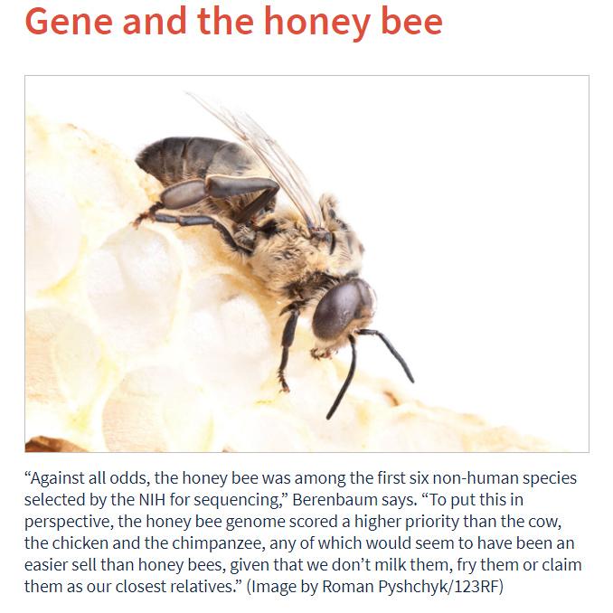Genes and the honeybee